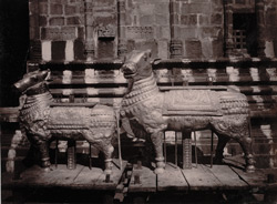 Two silver vahanas belonging to the Shiva Temple, Tiruvadi
